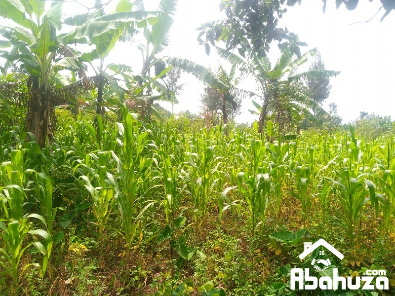 A PLOT FOR SALE IN KIGALI AT GAHANGA